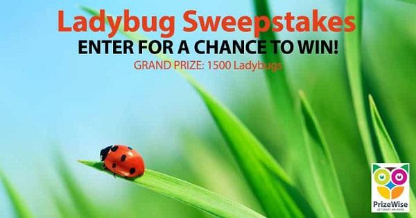 Pretty Ladybug Sweepstakes