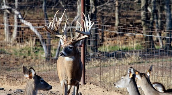 Texas Hunt Giveaway