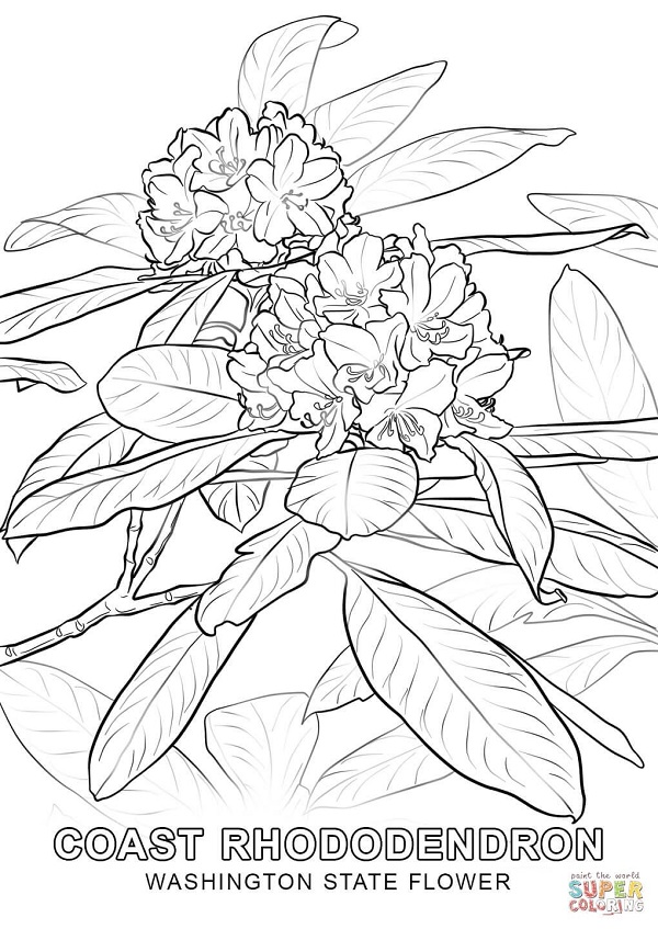 Calming Adult Coloring Book Giveaway