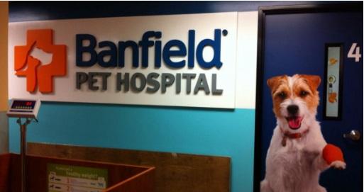 Free Banfield Pet Hospital Consultation