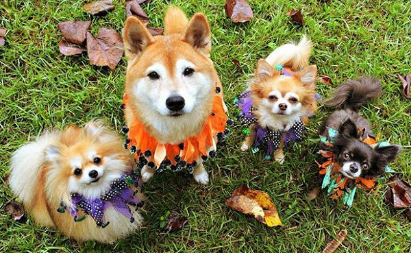 Free Howl-oween Dog Party