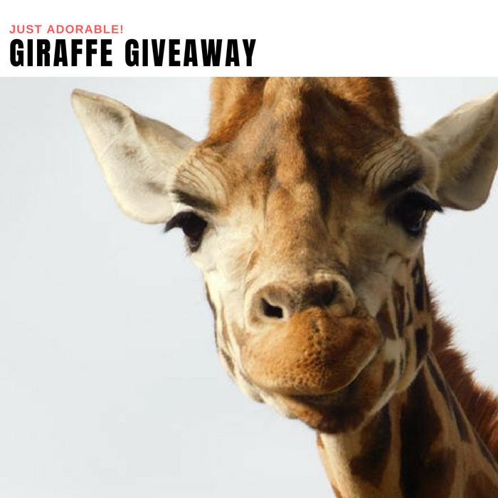 Giraffe Giveaway