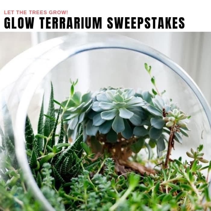 Glow Terrarium Sweepstakes