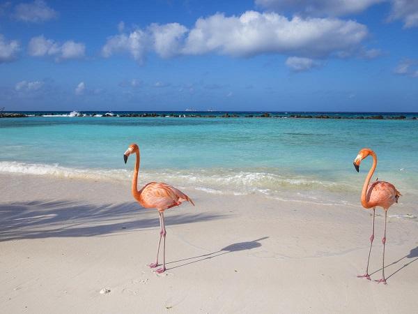 Aruba Vacation Sweepstakes