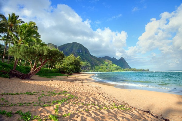 Hawaii Trip Sweepstakes