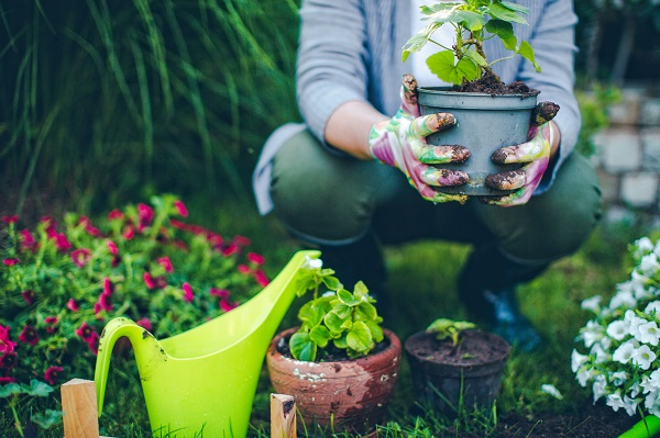 Free 2019 Gardener's Idea Book
