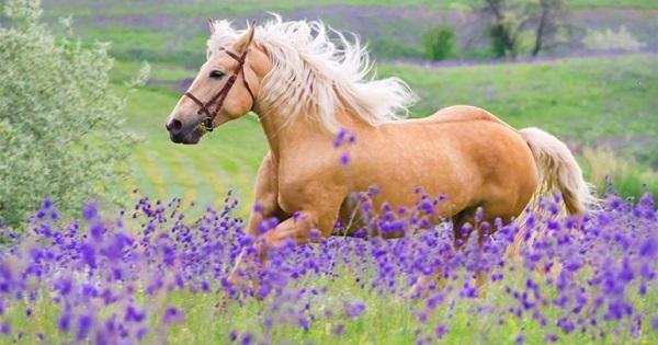 $1,000 Horse Shopping Spree Sweepstakes