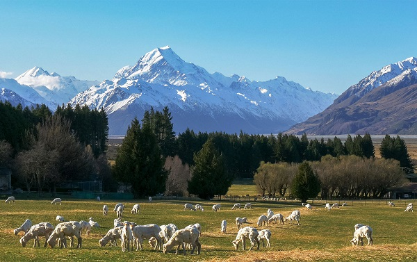 Trip to New Zealand Sweepstakes