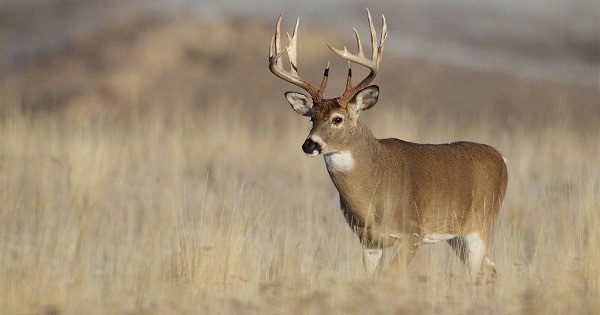 5 Day Hunting Trip In Kansas Sweepstakes